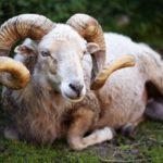 牡羊座B型の性格は?牡羊座B型あるあるから恋愛傾向から浮気癖の有無まで調査