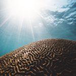 珊瑚(コーラル)が持つ意味は?パワーストーンとしての効果一覧 恋愛やお守り効果について