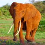 【動物占い】ゾウの性格を調査!恋愛傾向や相性なども合わせてチェック