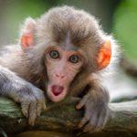 【動物占い】猿の性格を調査!恋愛傾向や相性なども合わせてチェック
