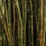 【夢占い】夢で森を歩いていたのは何のサイン?森の夢の意味を調査