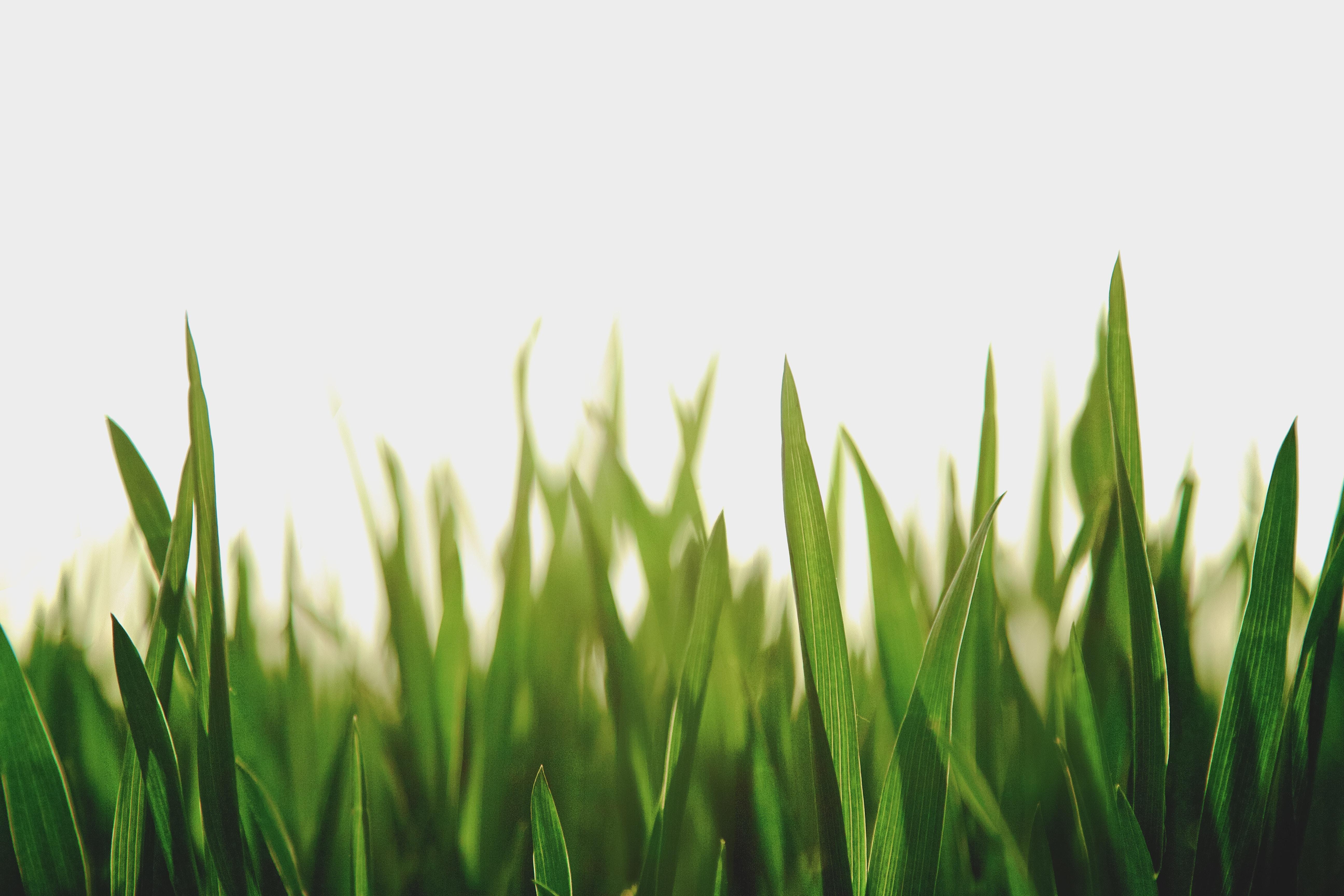 夢占いで緑が示す意味は?緑が目立つ夢について徹底調査