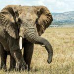 【夢占い】夢で象が出てきたのは何のサイン?象の夢の意味を調査