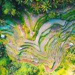 【夢占い】夢で畑が出てきたのは何のサイン?畑の夢の意味を調査
