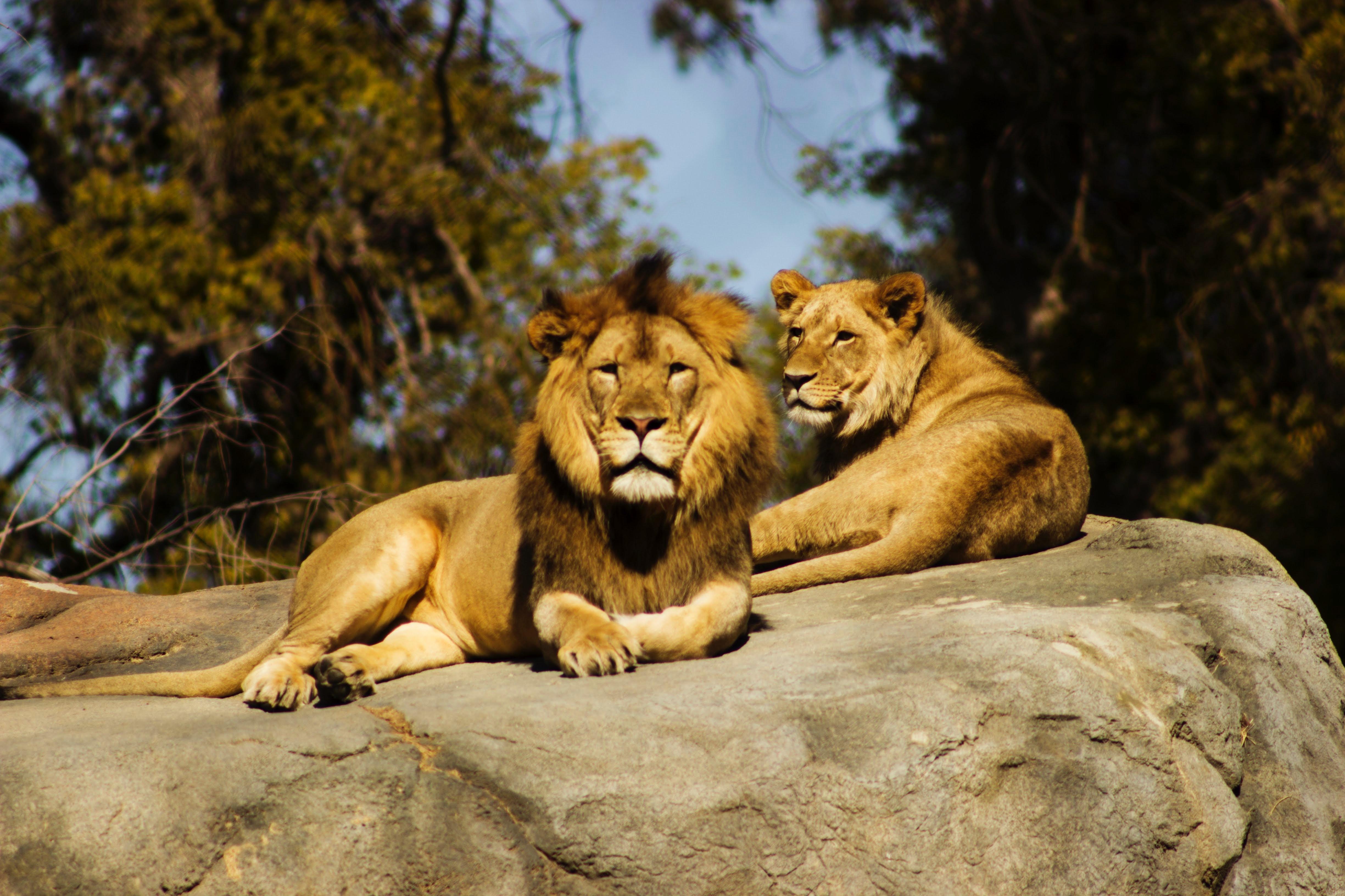 【夢占い】動物園に行く夢は何のサイン?動物園の夢の意味を調査