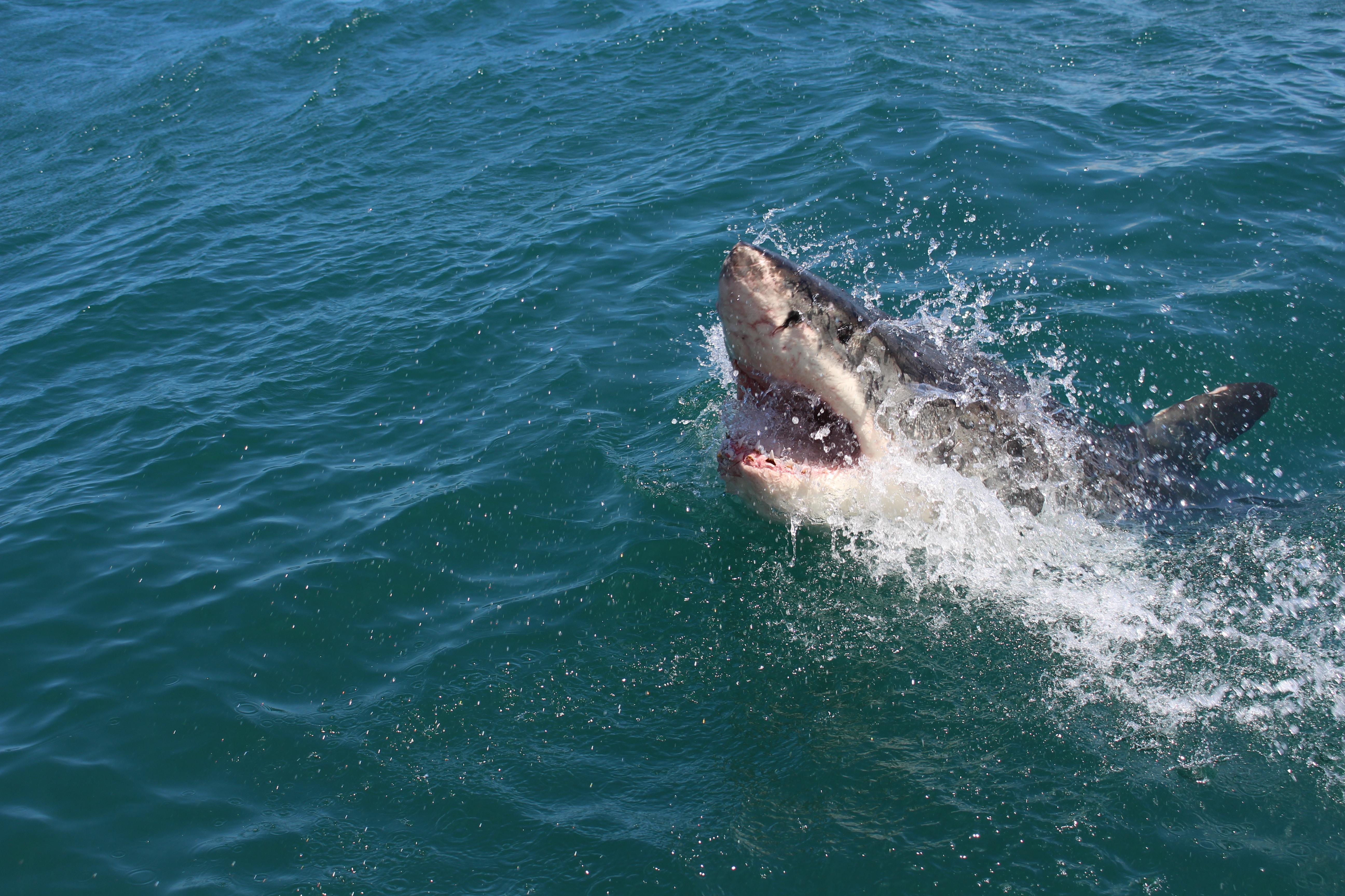 【夢占い】夢でサメを見たのは何のサインは?サメの夢占いを徹底解説