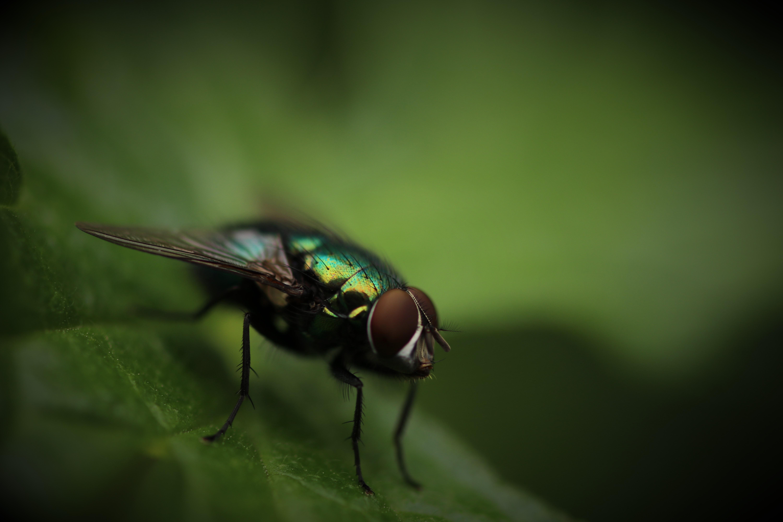 夢占いで虫が意味するサインは?虫が夢に出てきた夢の意味を解説