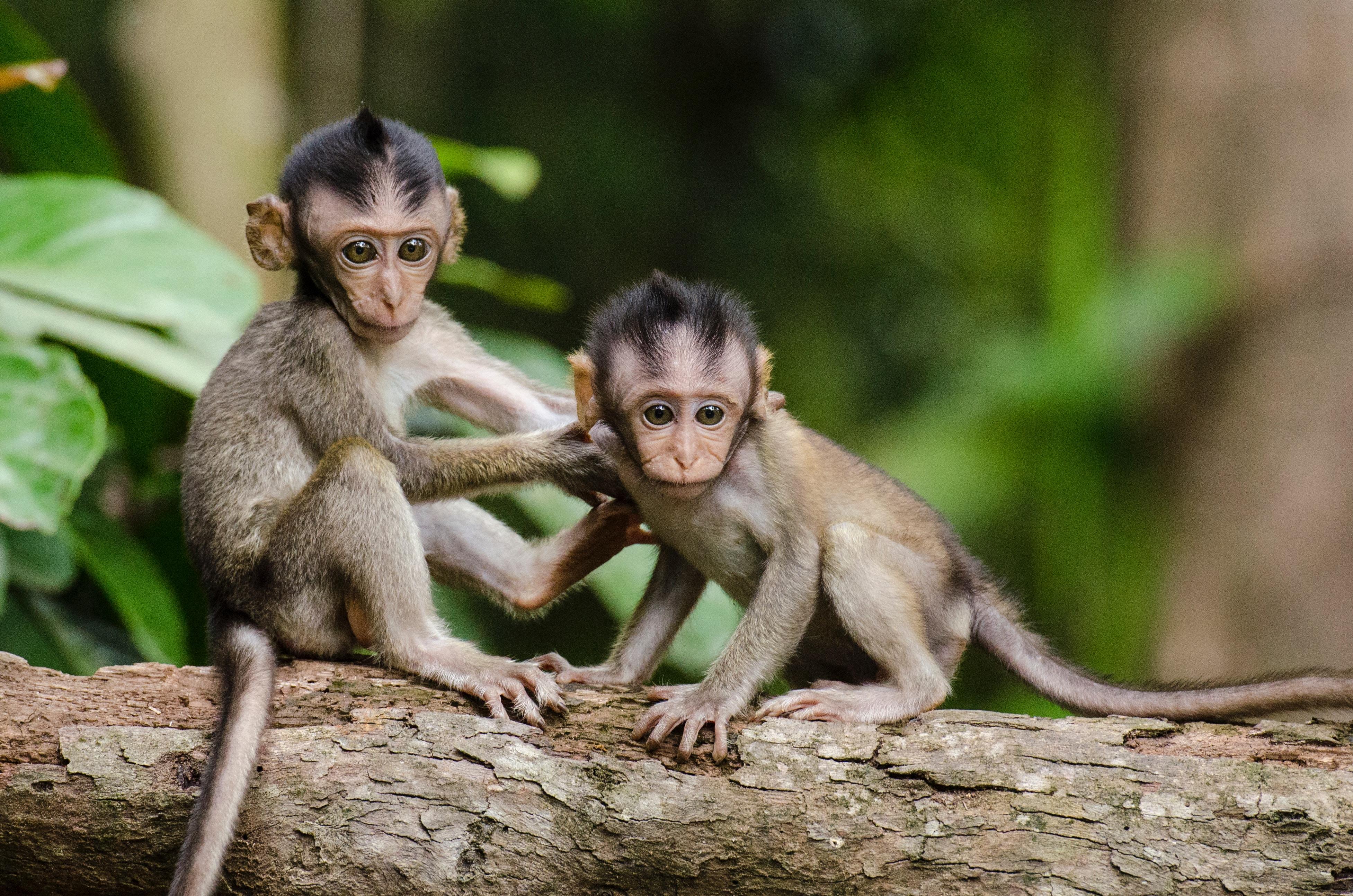 夢占いで猿が意味するサインは?猿が夢に出てきた夢の意味を解説