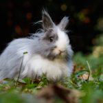 【夢占い】夢にウサギが出てきたのは何のサイン?ウサギの夢の意味を調査