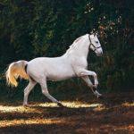 【夢占い】夢に馬が出てきたのは何のサイン?馬の夢の意味を調査