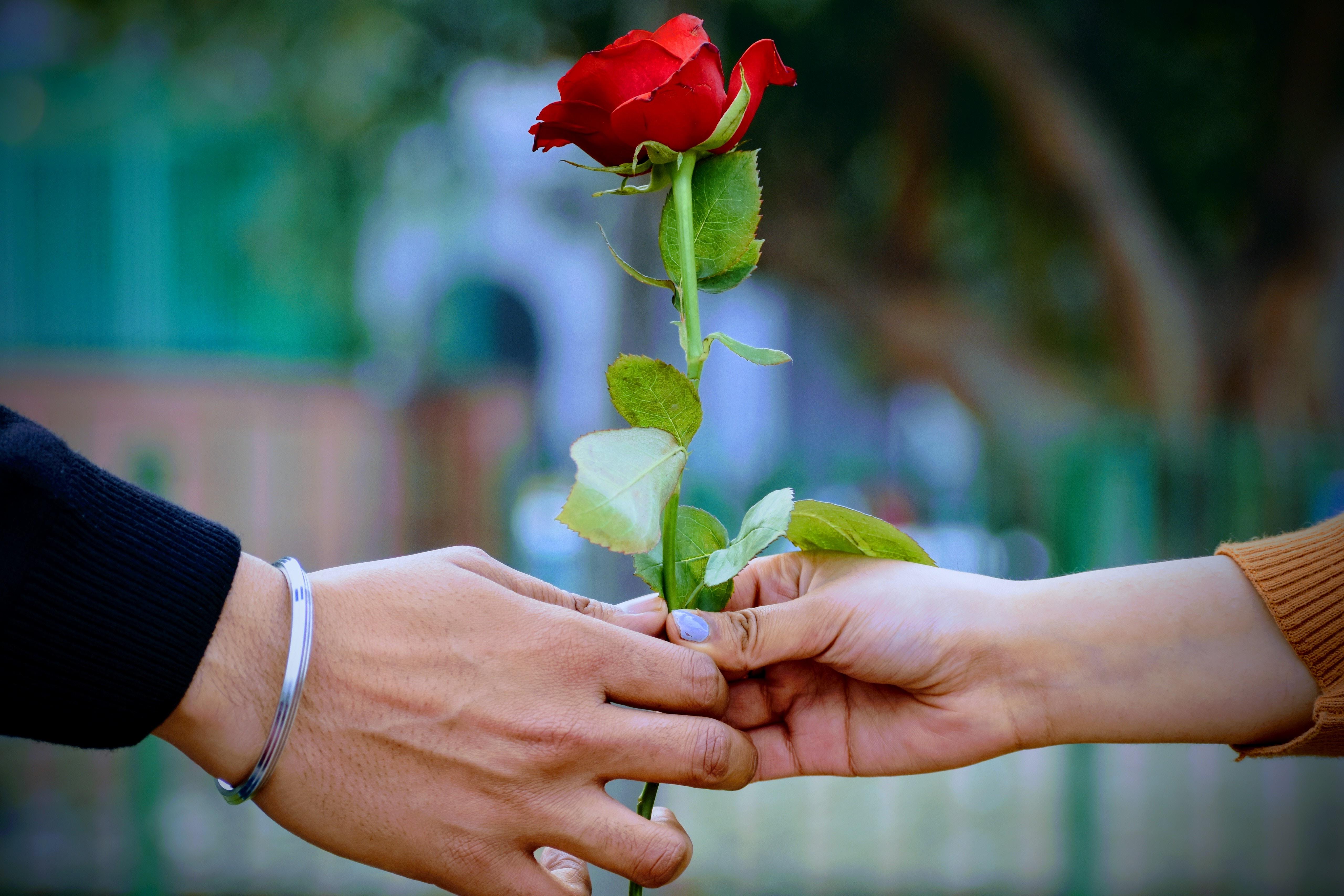 夢占いで薔薇の花が意味するサインは?薔薇の本数や薔薇の色などで意味が分かるのかも解説