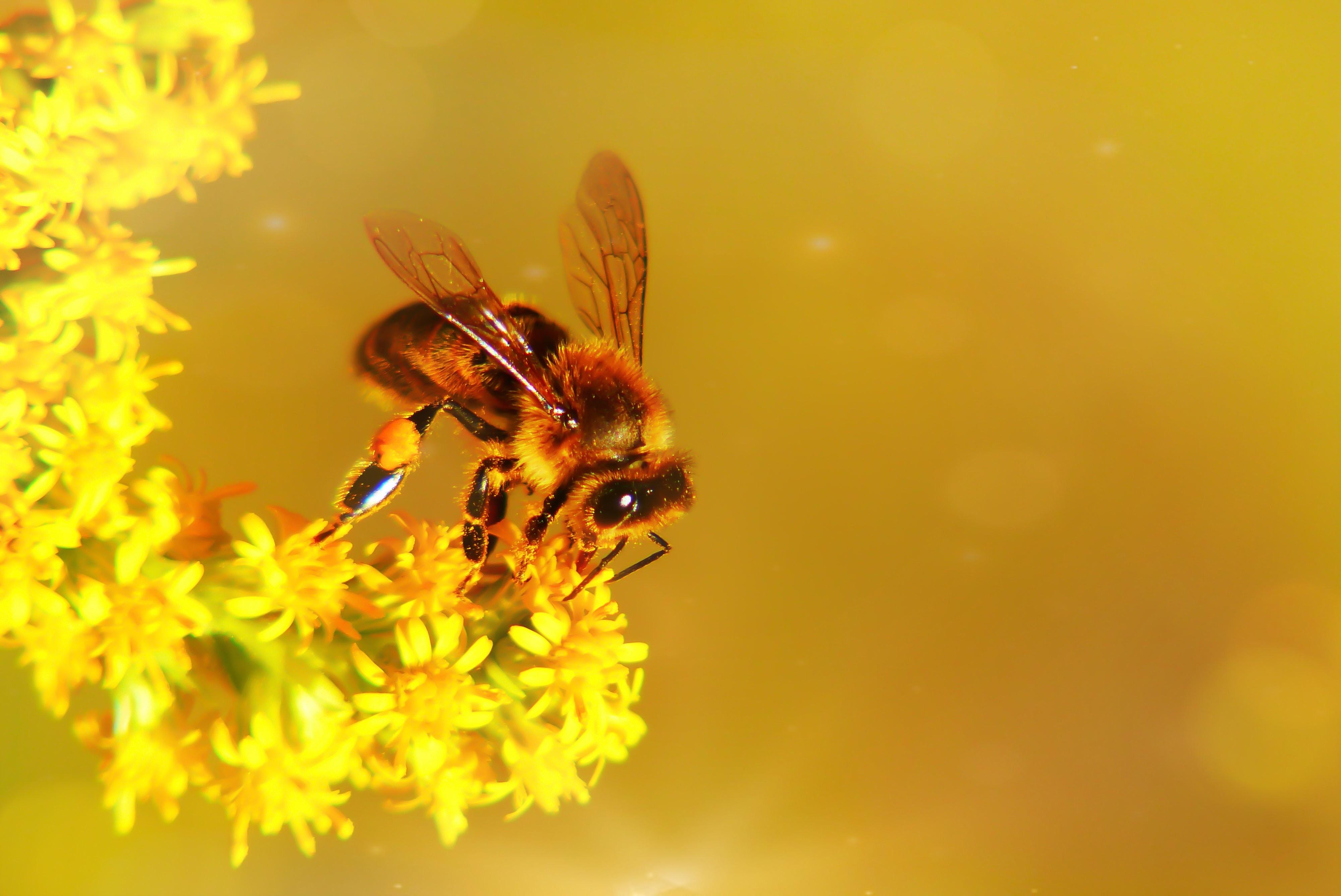 夢占いで蜂が意味するサインは?蜂が夢に出てきた夢の意味を解説