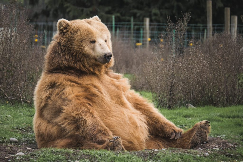 に 襲 夢 熊 われる