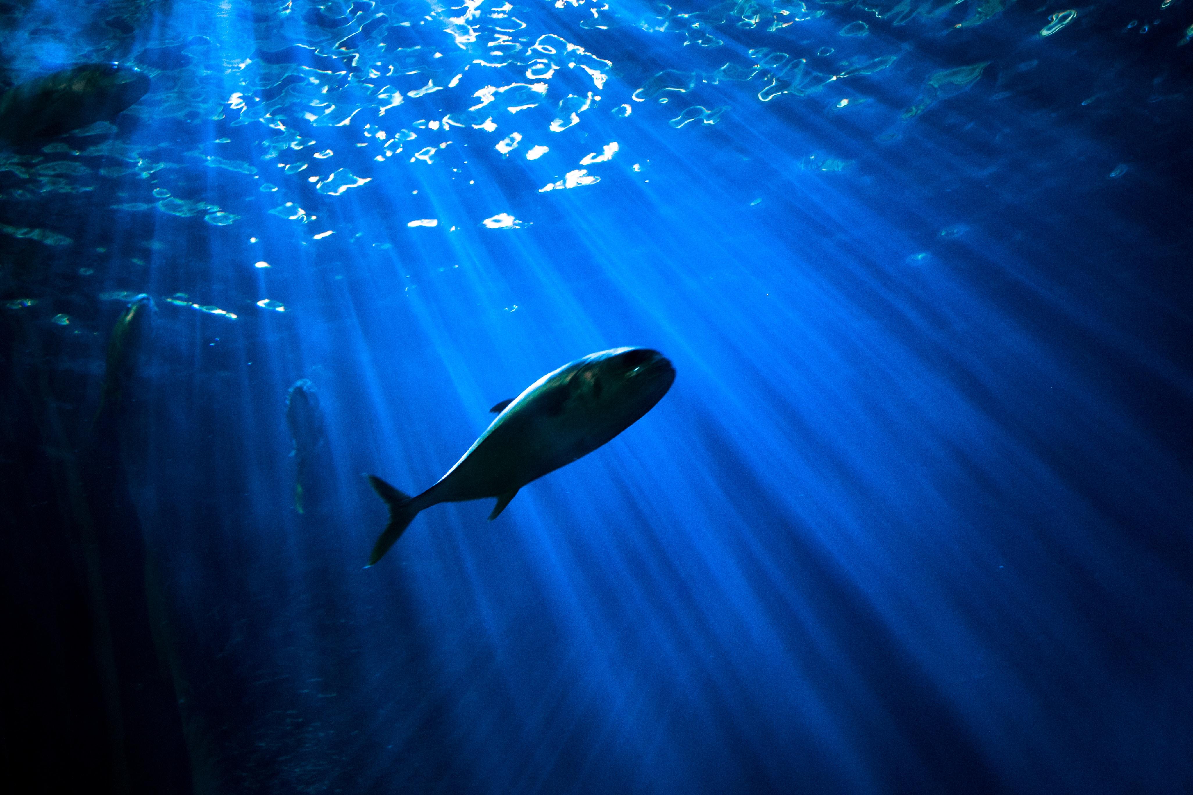 夢占いで魚が意味するサインは?魚が夢に出てきた夢の意味を解説