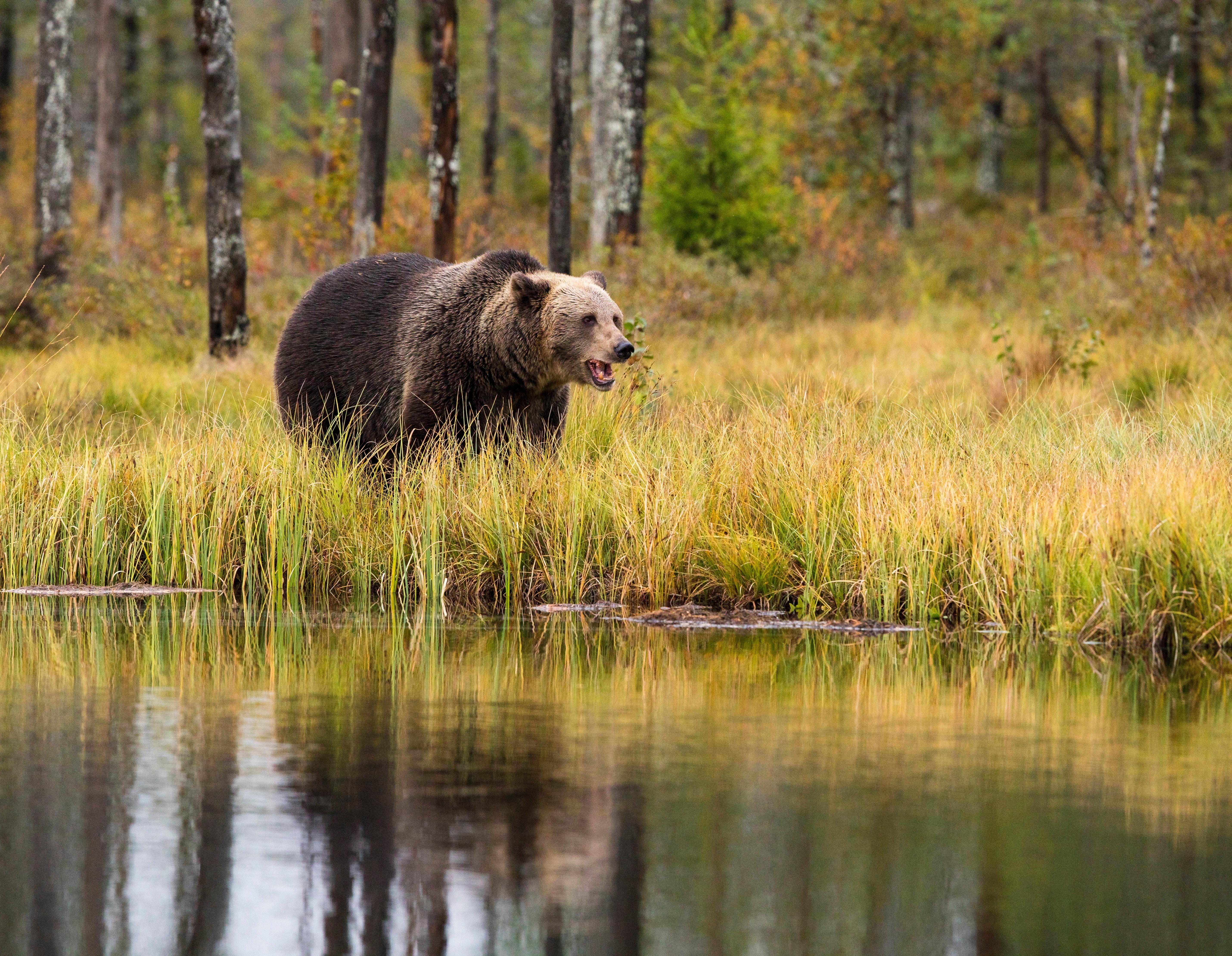 夢占いで熊が意味するサインは?熊が夢に出てきた夢の意味を解説