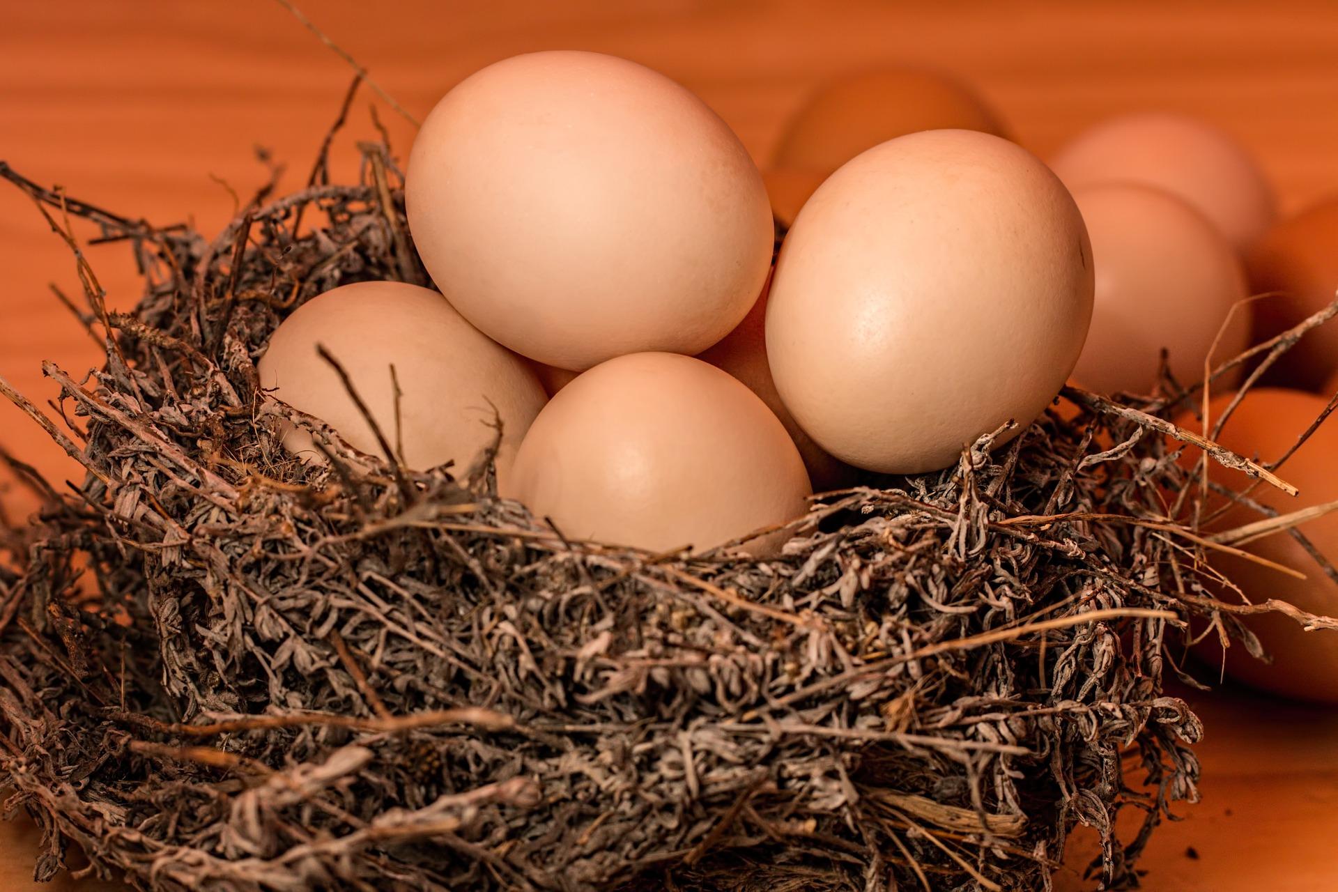 夢占いで卵が意味するサインは?卵が夢に出てきた夢の意味を解説