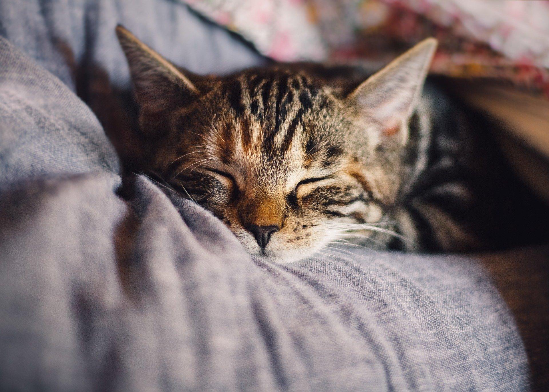 猫が出てくる夢は何のサイン?猫が出てくる夢の意味を調査