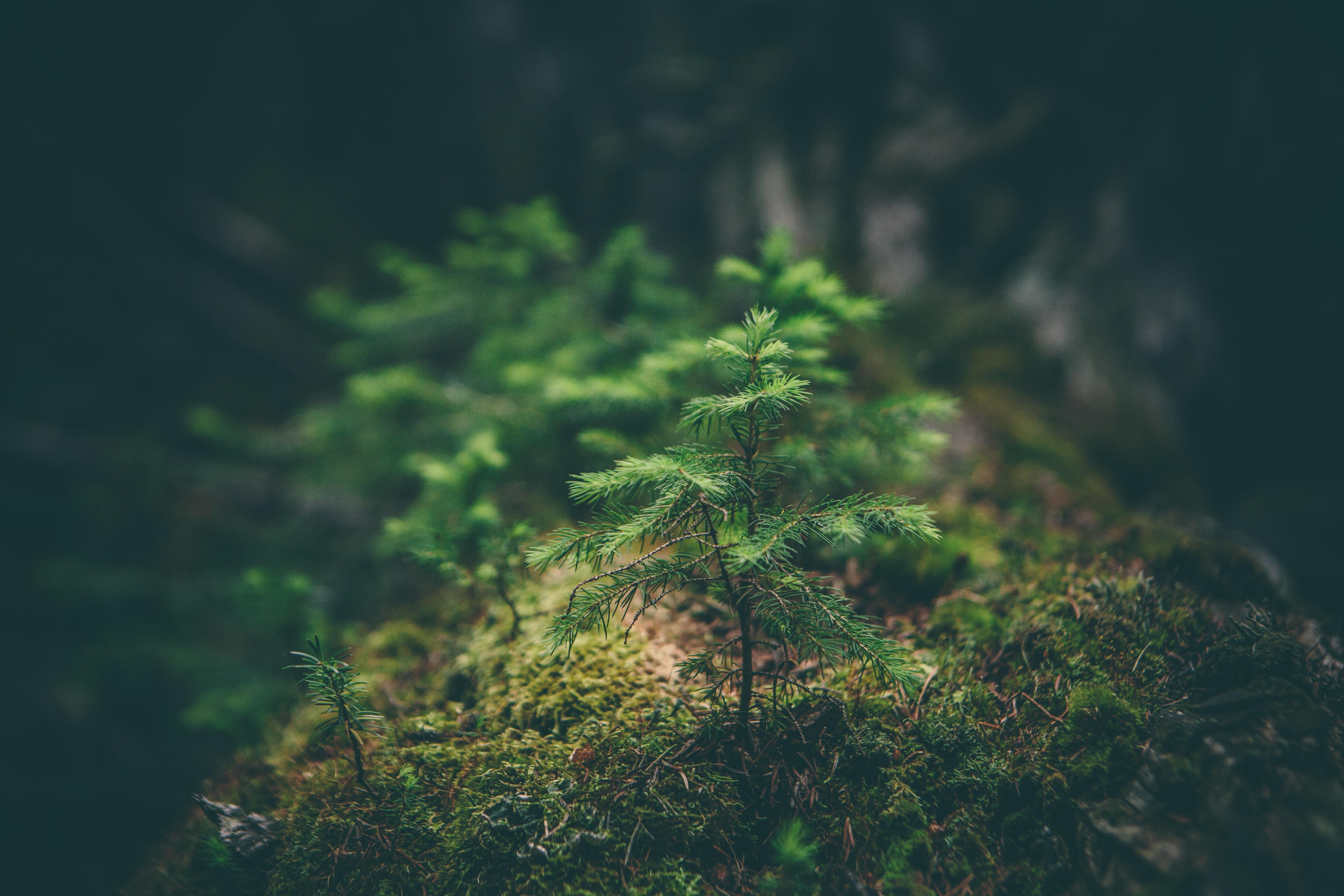 珪化木が持つ意味は?パワーストーンとしての効果一覧恋愛やお守り効果について
