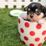 【夢占い】夢に犬が出てきたのは何のサイン?犬の夢の意味を調査
