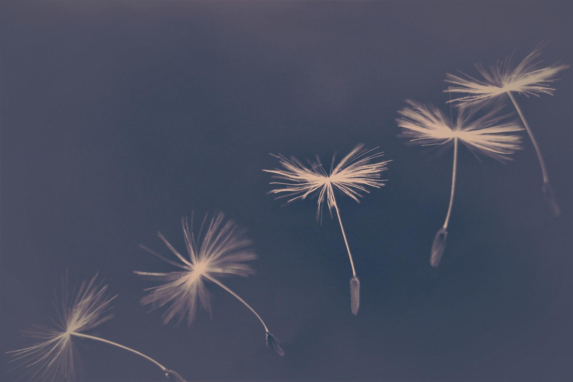 【夢占い】願望夢とは?願望夢の原因や、不安夢が意味するサインについて解説