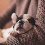 [夢占い]ペットの夢は何のサイン?ペットの夢の意味を解説