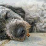 【夢占い】飼い犬や飼い猫が死ぬ夢は何のサイン?飼い犬や飼い猫が死ぬ夢の意味を調査