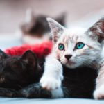 【夢占い】飼い猫が死ぬ夢は何のサイン?飼い猫が死ぬ夢の意味を調査